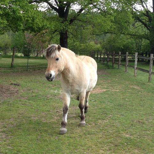Nanette : un poney câliné par nos partenaires retraités