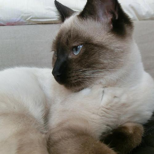 Nos partenaires retraités ont pris soin des lieux et de ses habitants : Marduk un chat siamois